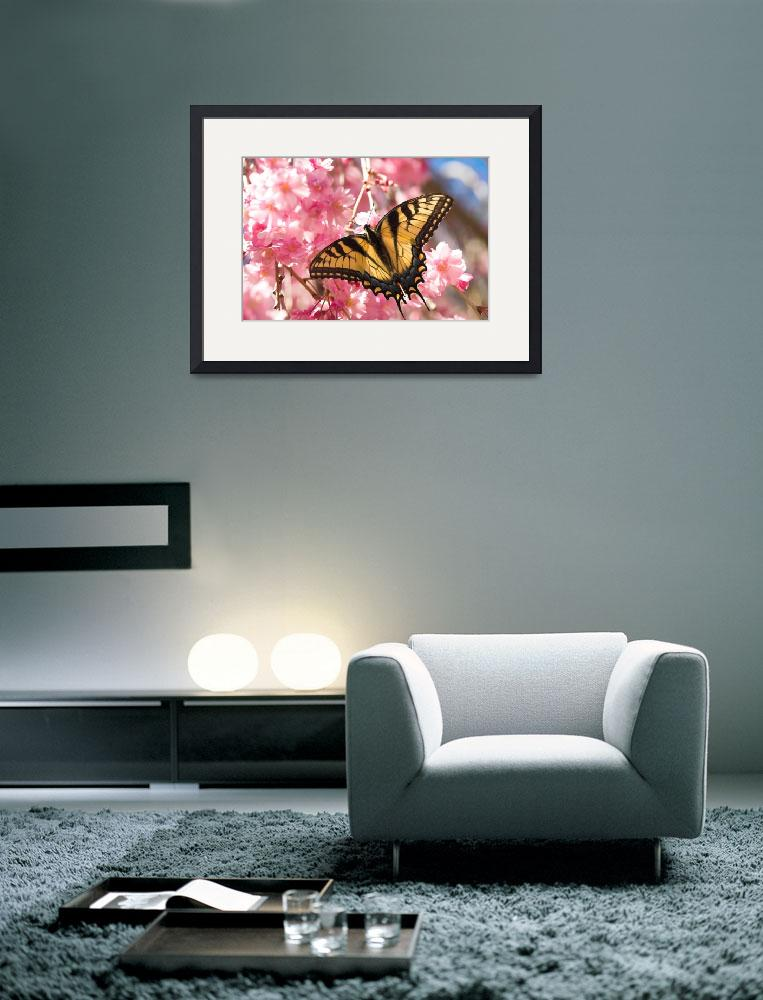 """Eastern Tiger Swallowtail--Raspberry Blush&quot  (2008) by tricia"