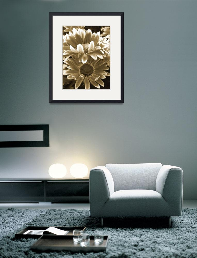 """Chrysanthemum in Sepia&quot  (2012) by vpicks"