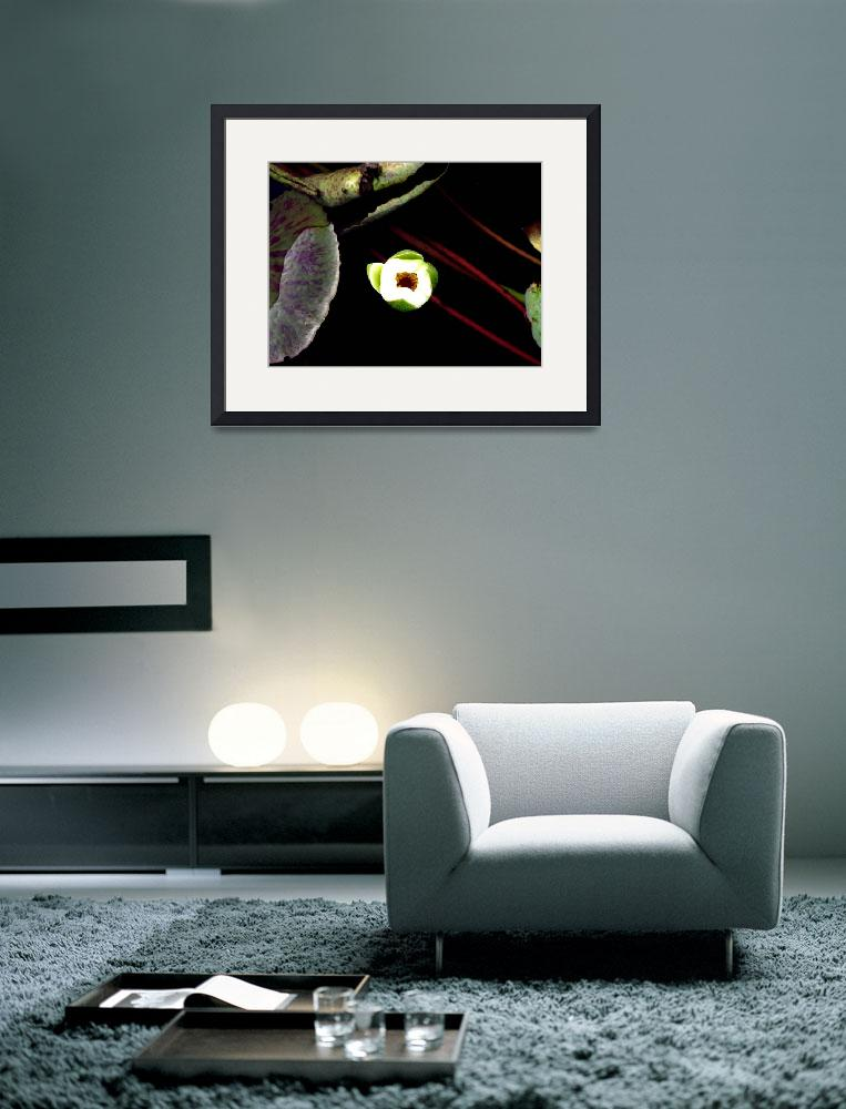 """Lotus2&quot  (2005) by myshellazart"
