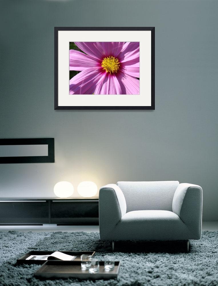 """Daisy Flower Macro Pink Purple Daisies&quot  (2010) by BasleeTroutman"