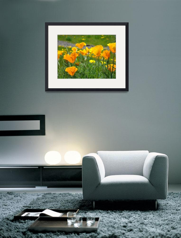 """Meadows Poppy Flowers Orange Poppies Fine Art&quot  (2009) by BasleeTroutman"
