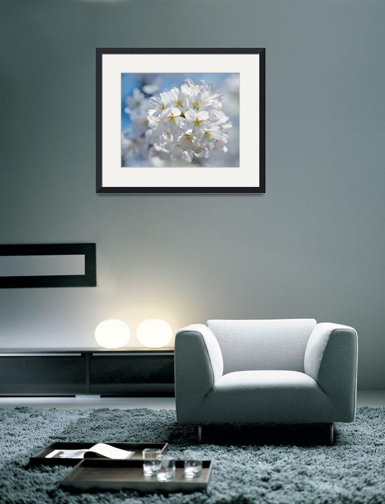 """In Full Bloom&quot  (2011) by ImageArt-Photography"