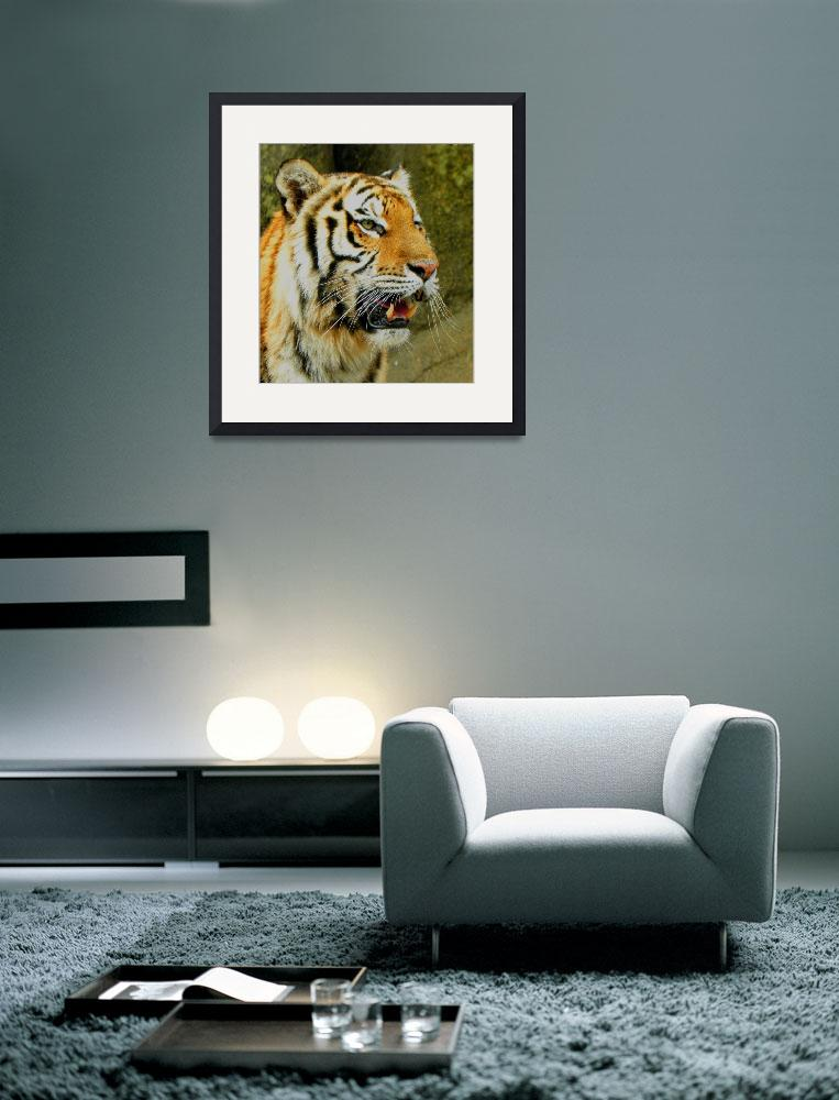 """Tiger Portrait&quot  (2010) by SandiOReilly"
