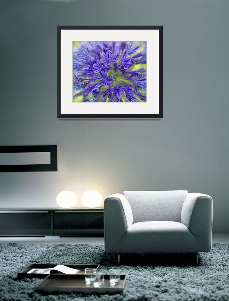 """Agapanthus&quot  (2012) by linde58"