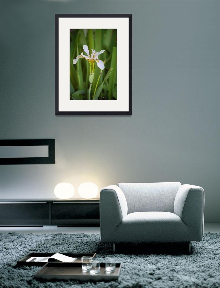 """Tall Wild Iris&quot  (2011) by rderder"