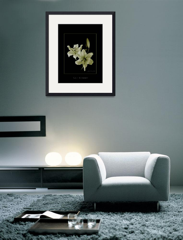 """Yellow Lilies on Black&quot  (2008) by DocPixel"
