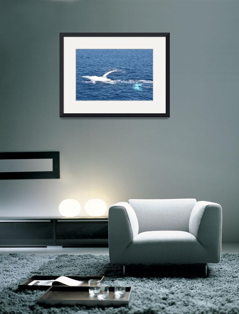 """NaP_ Whale Watching138&quot  by nevilleprosser"