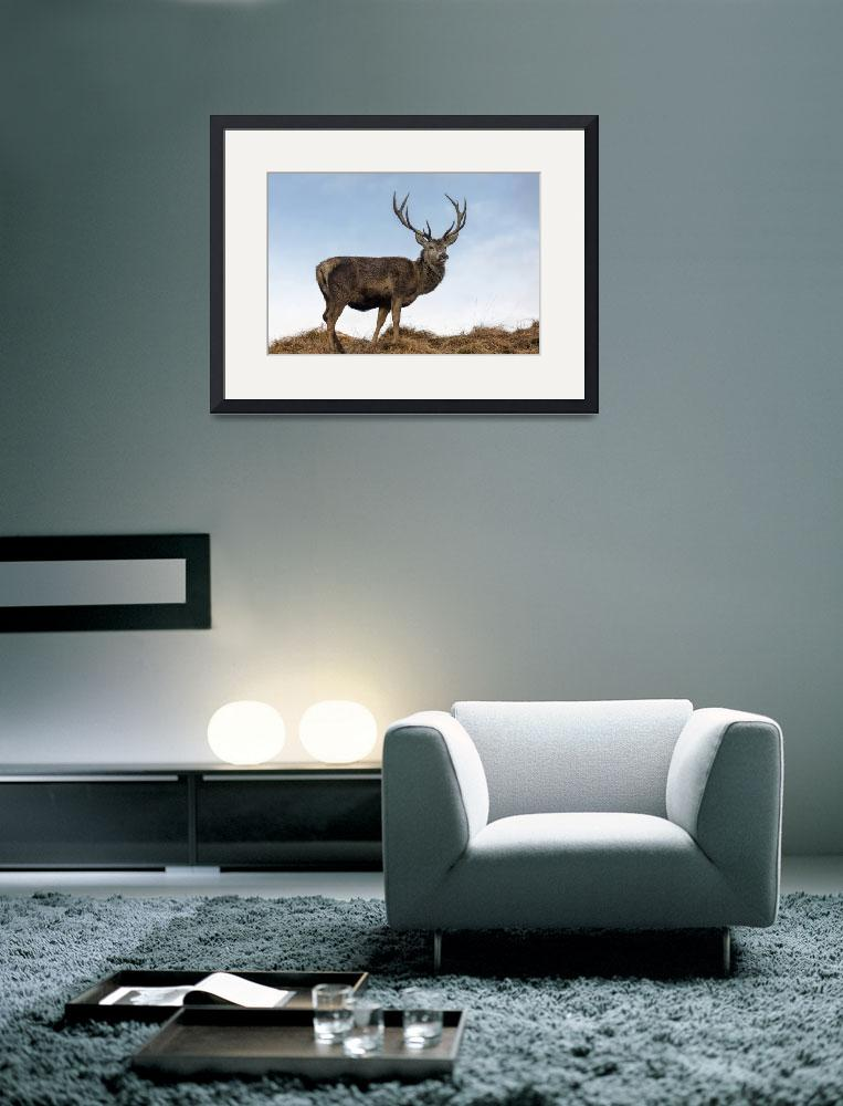 """Red Deer Stag on a Hilltop&quot  (2015) by derekbeattieimages"