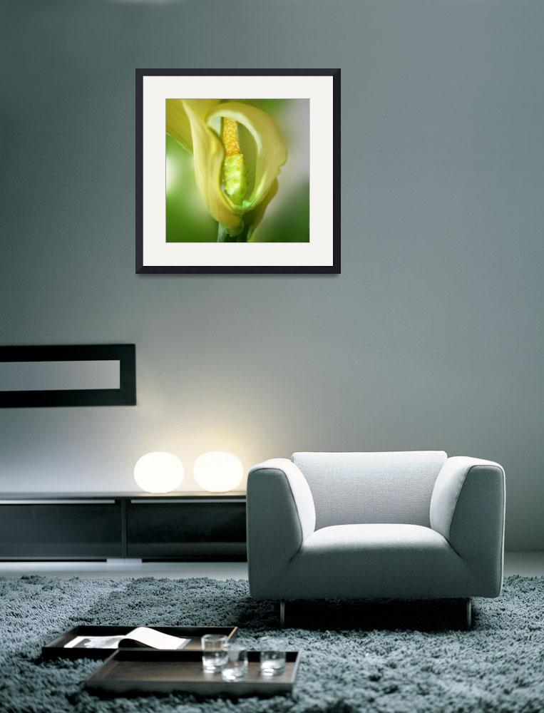 """Green Calla&quot  (2011) by AnneVis"