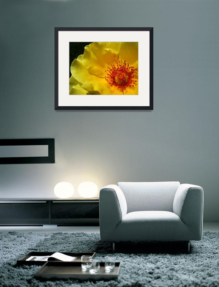 """Yellow rose watercolor&quot  (2006) by eye4nature"