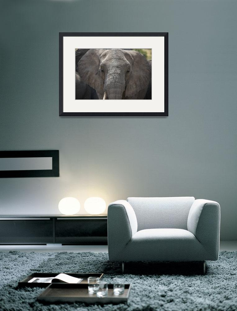 """Essence of Elephant&quot  (2012) by SederquistPhotography"