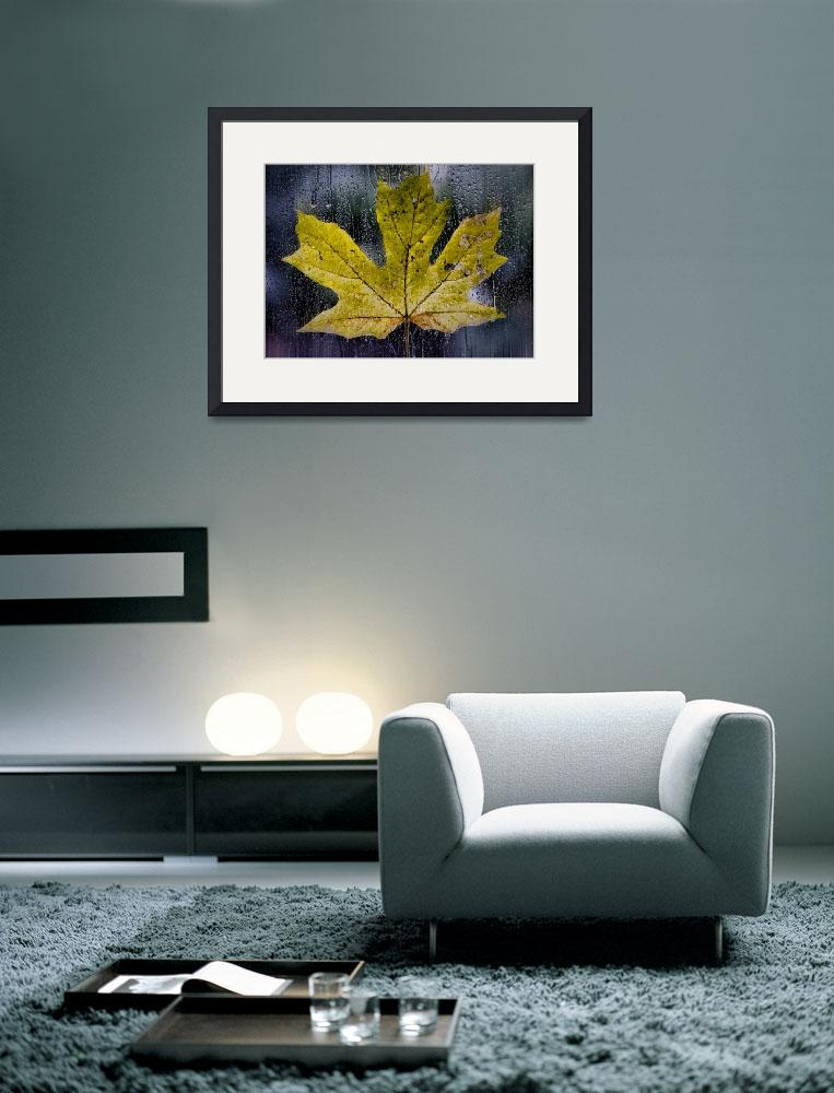 """Maple Leaf in the Morning Rain&quot  (2013) by boppintheblues"