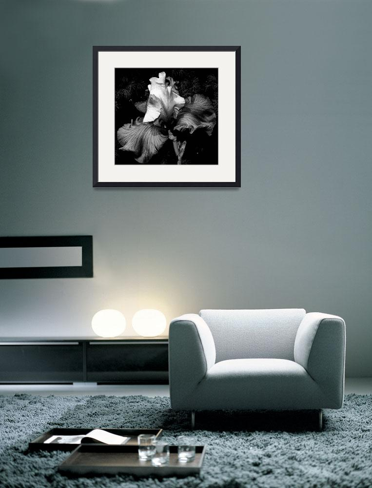 """Iris In Black And White&quot  (2009) by bavosiphotoart"