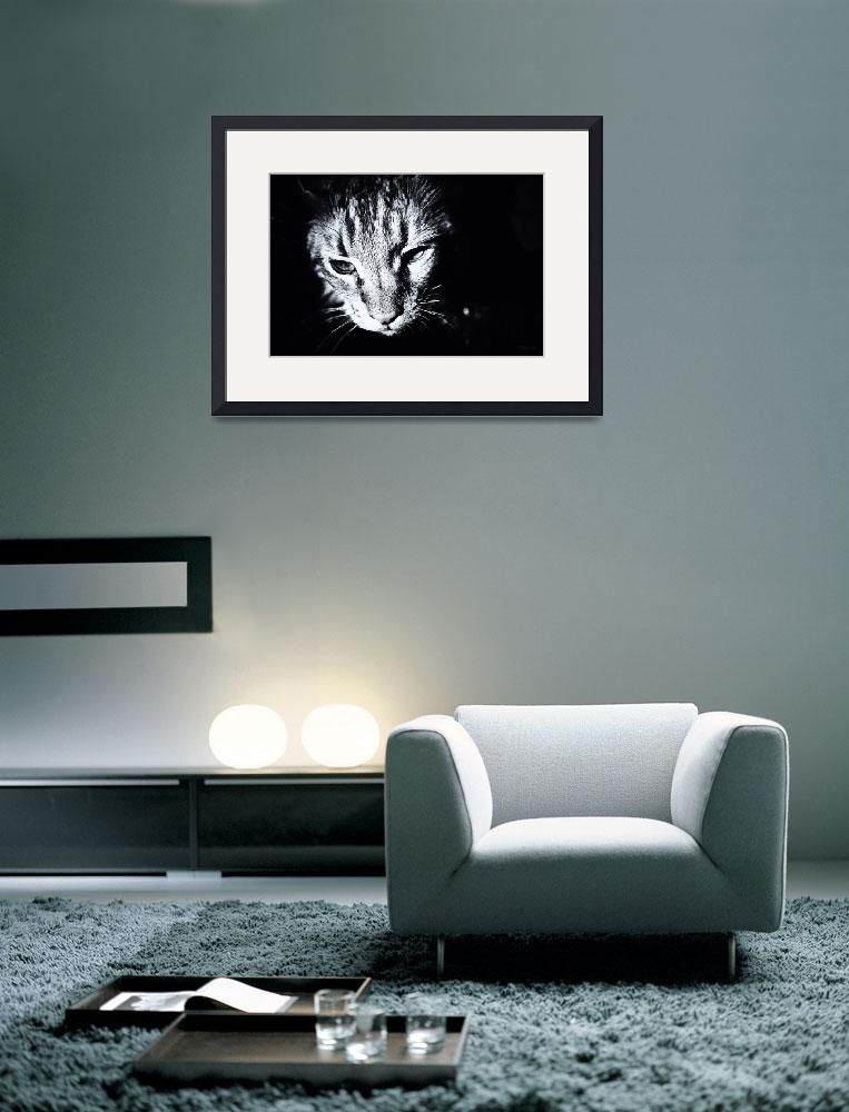 """Cat Portrait Black and White&quot  (2008) by Black_White_Photos"
