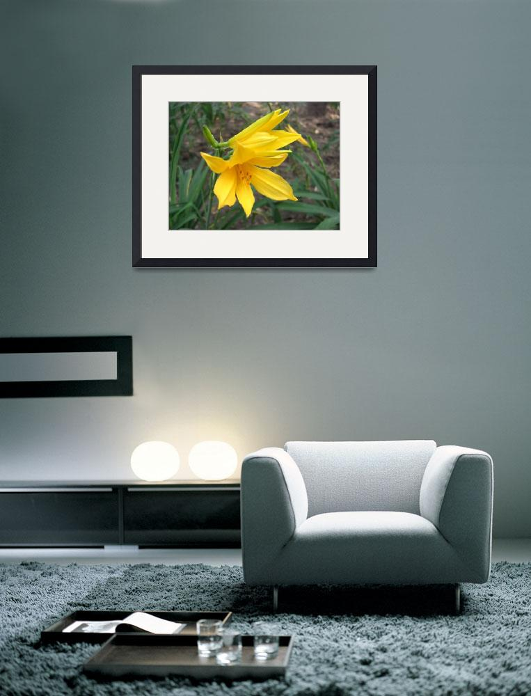 """Yellow Daylily 3&quot  (2009) by ChristopherInMexico"
