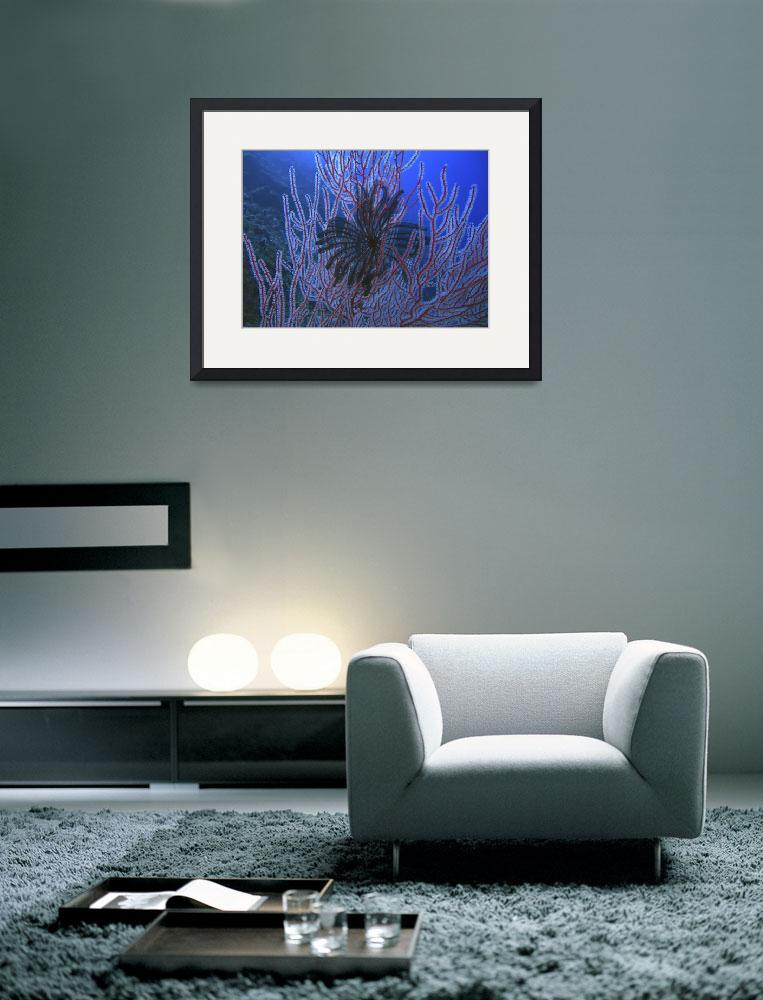 """Black Feather Star and Black Corals on the Wall&quot  by Mac"