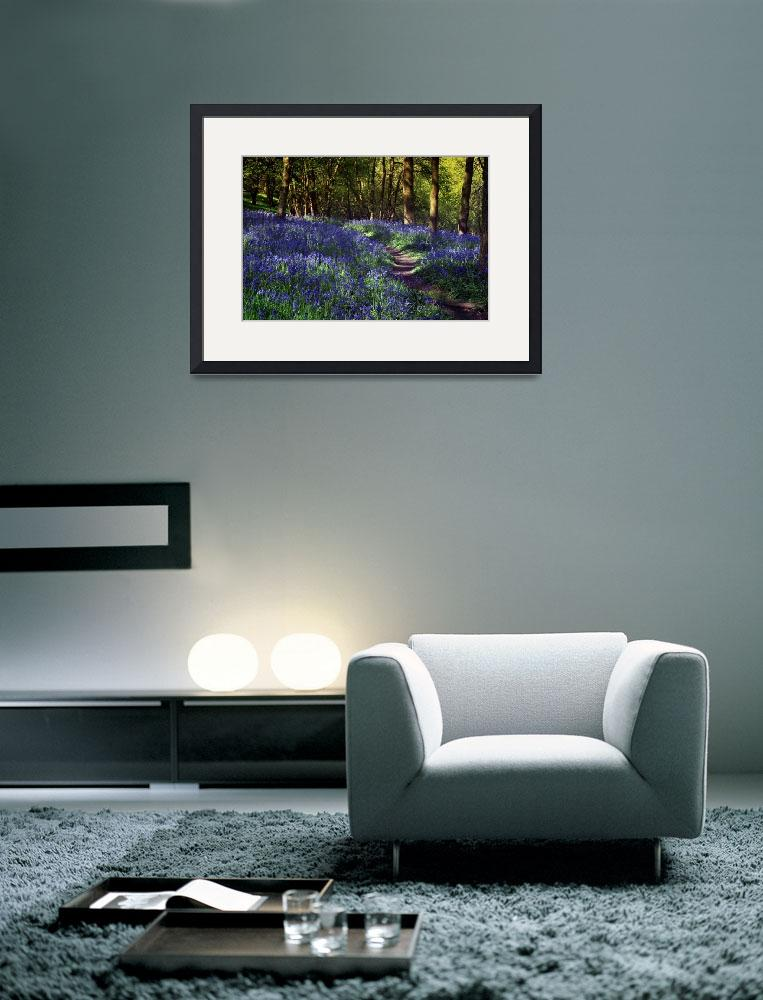 """Bluebell Woods&quot  (2010) by AnnG"