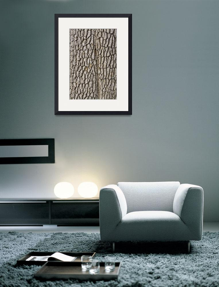 """Cottonwood Tree Texture Print&quot  (2011) by lightningman"
