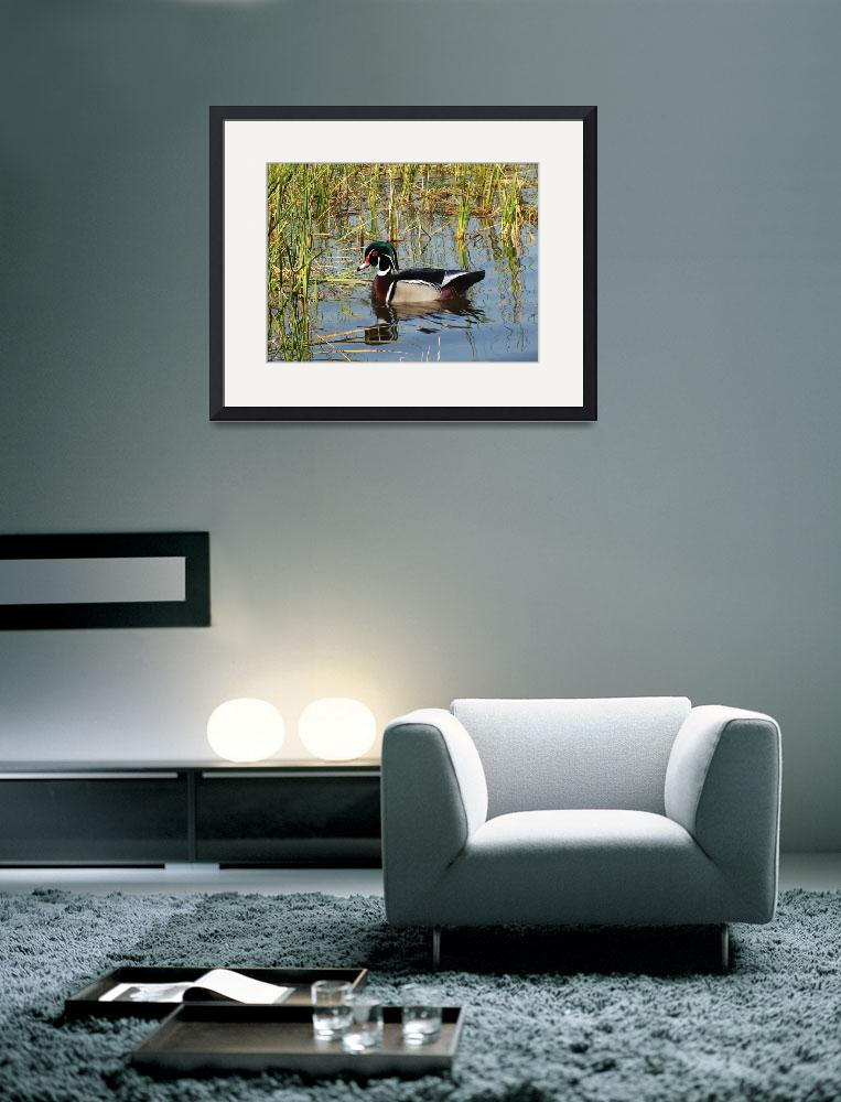 """Wood Duck on St. George Lake&quot  (2013) by spadecaller"