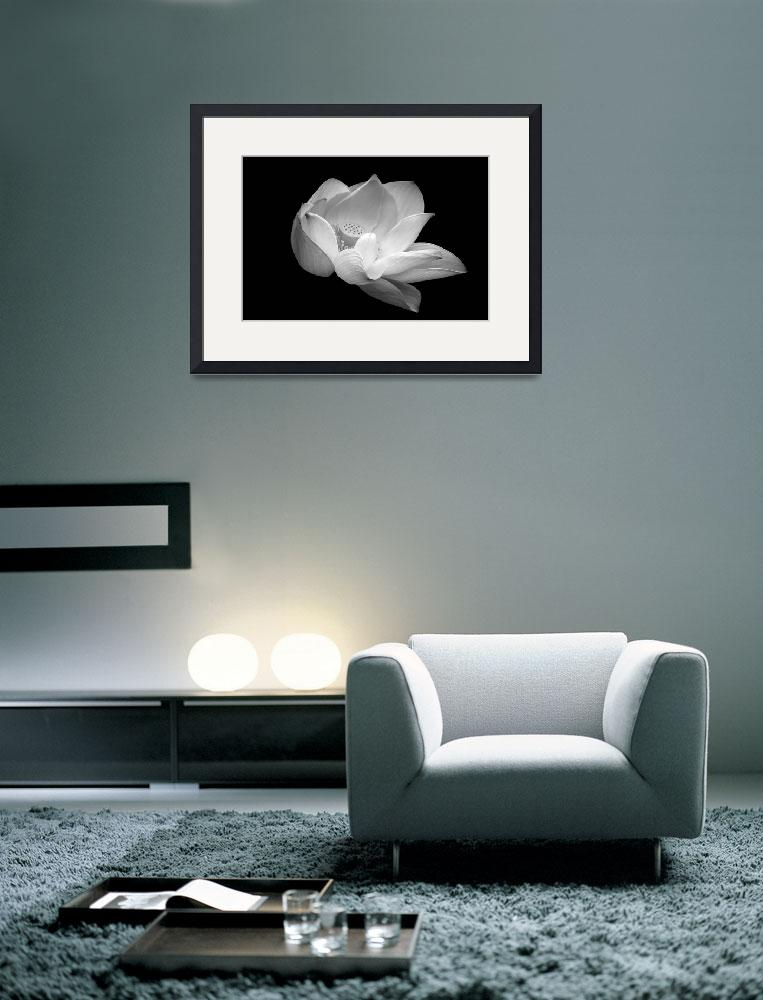 """Indian Sacred Lotus in black and white&quot  (2013) by LightHeart"