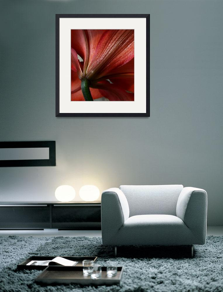 """Asiatic Lily&quot  (2010) by bavosiphotoart"