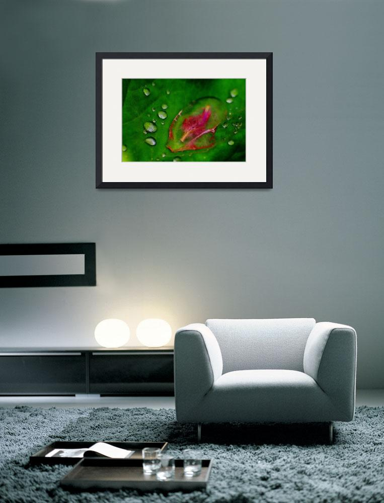 """Flower & Droplets&quot  (2008) by kenart"