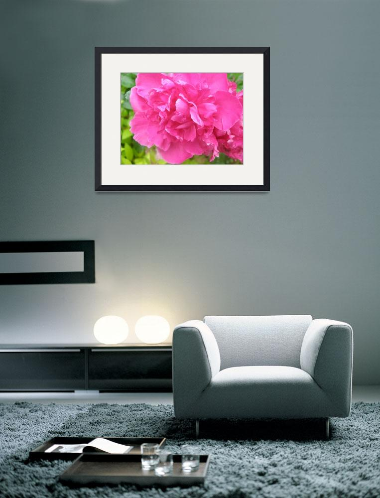 """Hot Pink Peony&quot  (2009) by TheMears"