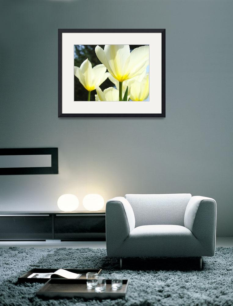 """Tulips White Sunlit Glowing&quot  (2011) by BasleeTroutman"