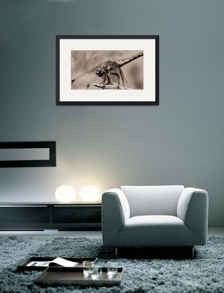 """Dragonfly at Rest&quot  (2005) by LawnoveN"