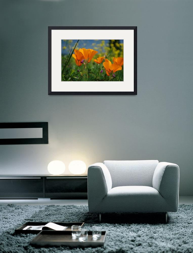 """California Poppies&quot  (2009) by kendietz"