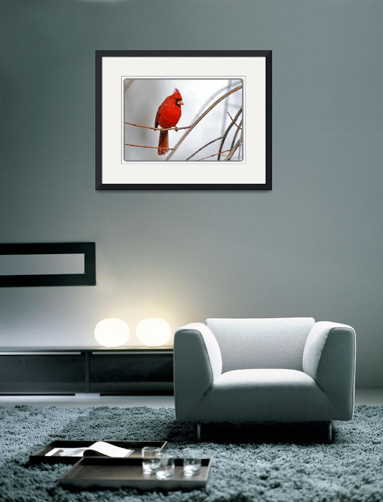 """Northern Cardinal -- Red & Gray&quot  by tricia"