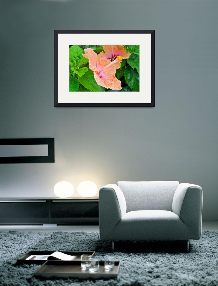 """Hibiscus&quot  (2010) by ImageArt-Photography"