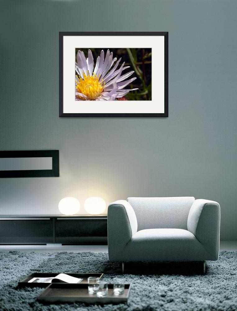 """Daisy Wildflower near Fairplay, Colorado&quot  (2009) by EagleEyesDesign"