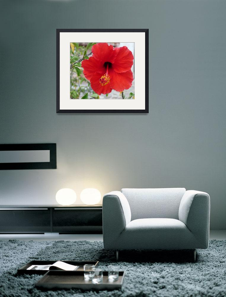 """The Hibiscus&quot  (2009) by photographybydonna"