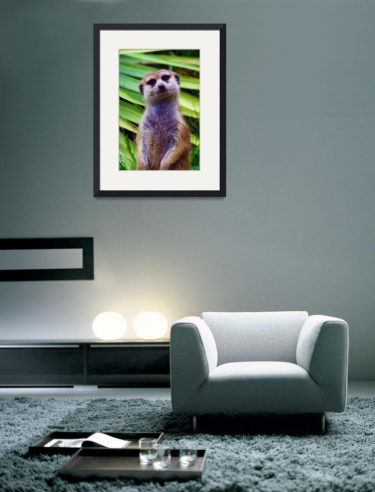 """Meerkat Portrait&quot  (2012) by inspirationalphotocreatio"