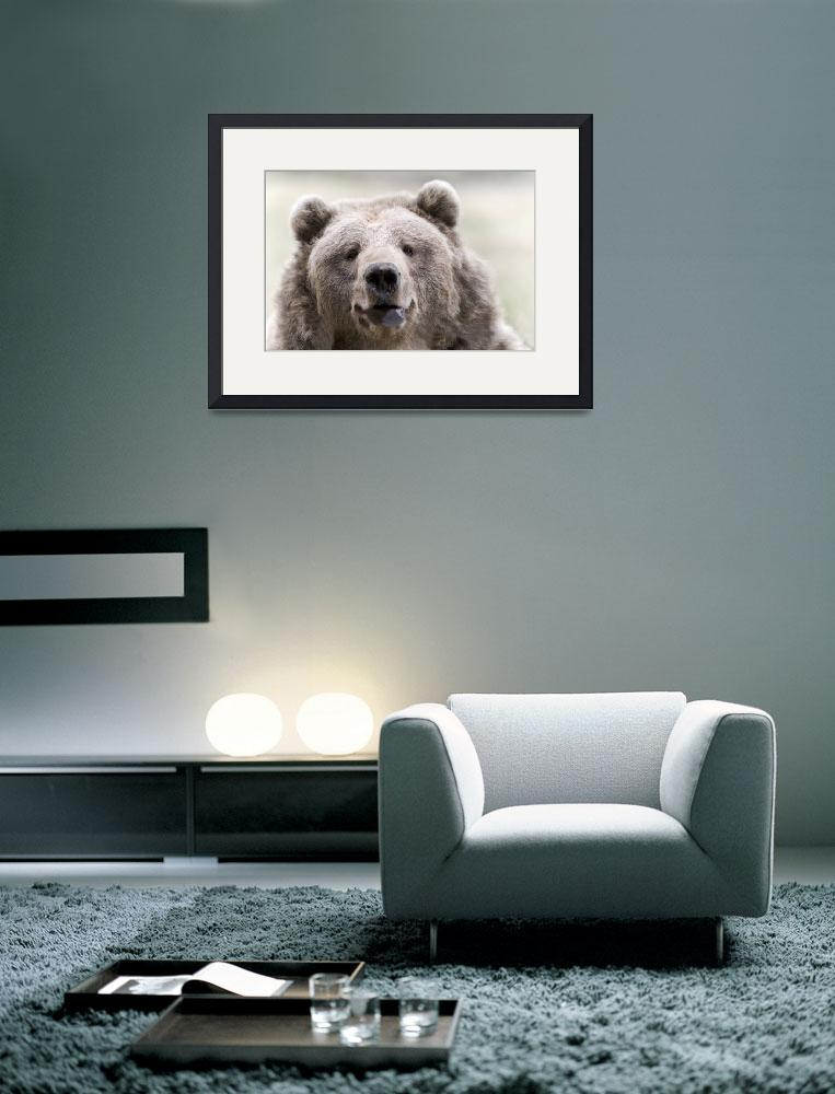 """Kodiak Bear&quot  (2008) by paulasuterphoto"