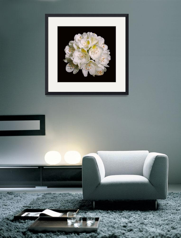 """White Rhododendron Blossom #1&quot  (2008) by budo"