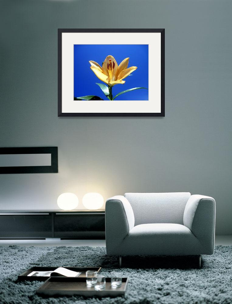 """Yellow LIly&quot  (2012) by johnscanvassprints"