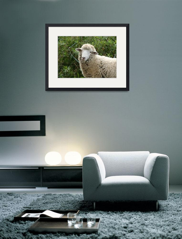 """Sheep in a Pasture&quot  (2012) by rhamm"
