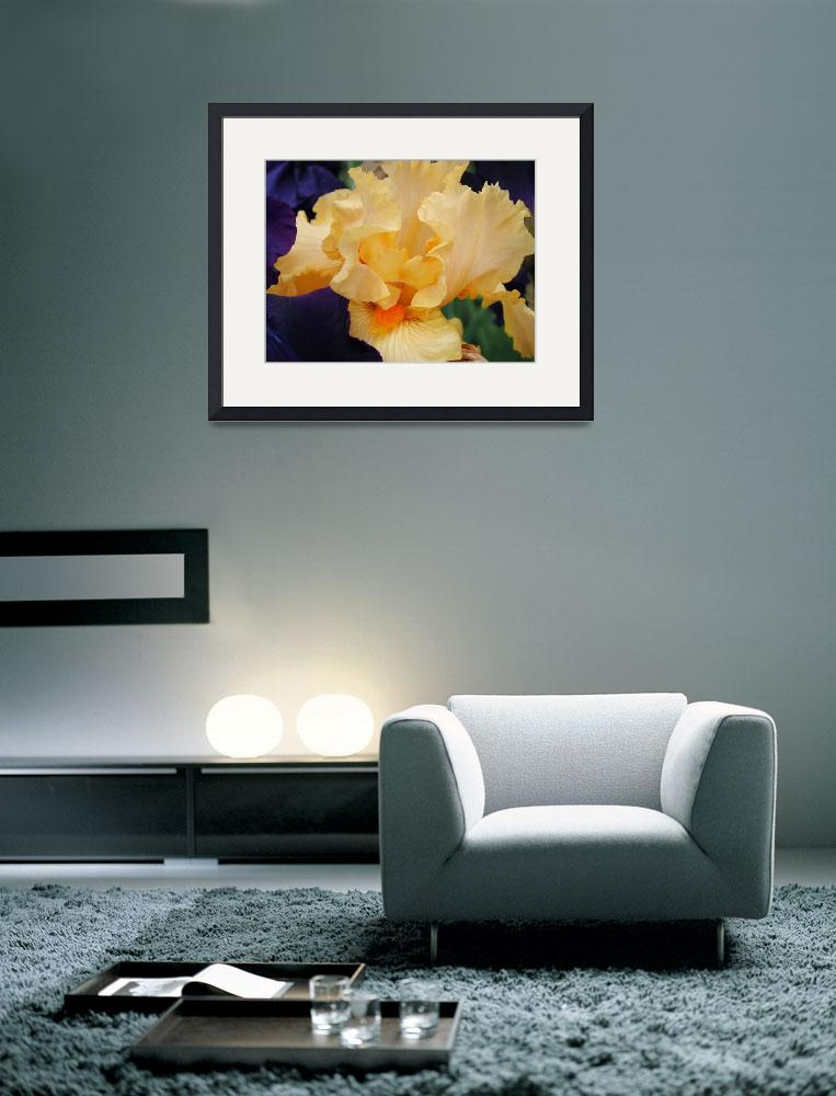 """Iris Flower Botanical Garden Peach Irises&quot  (2011) by BasleeTroutman"