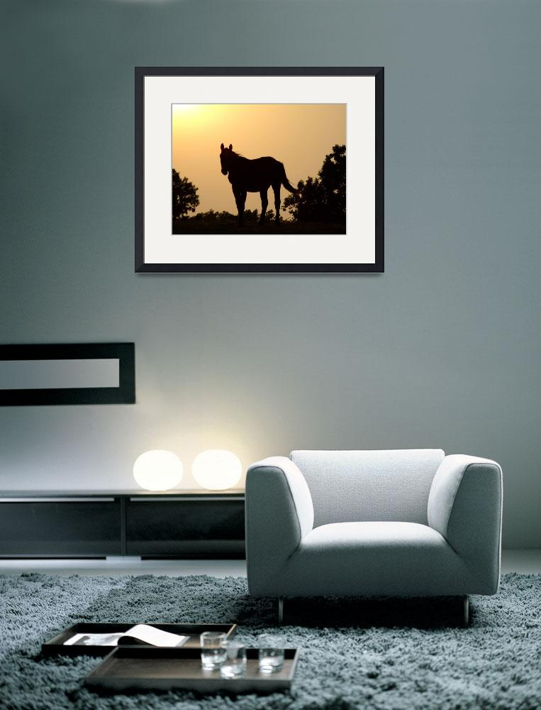 """Horse Silhouette Sunset&quot  (2009) by Hartphotography"