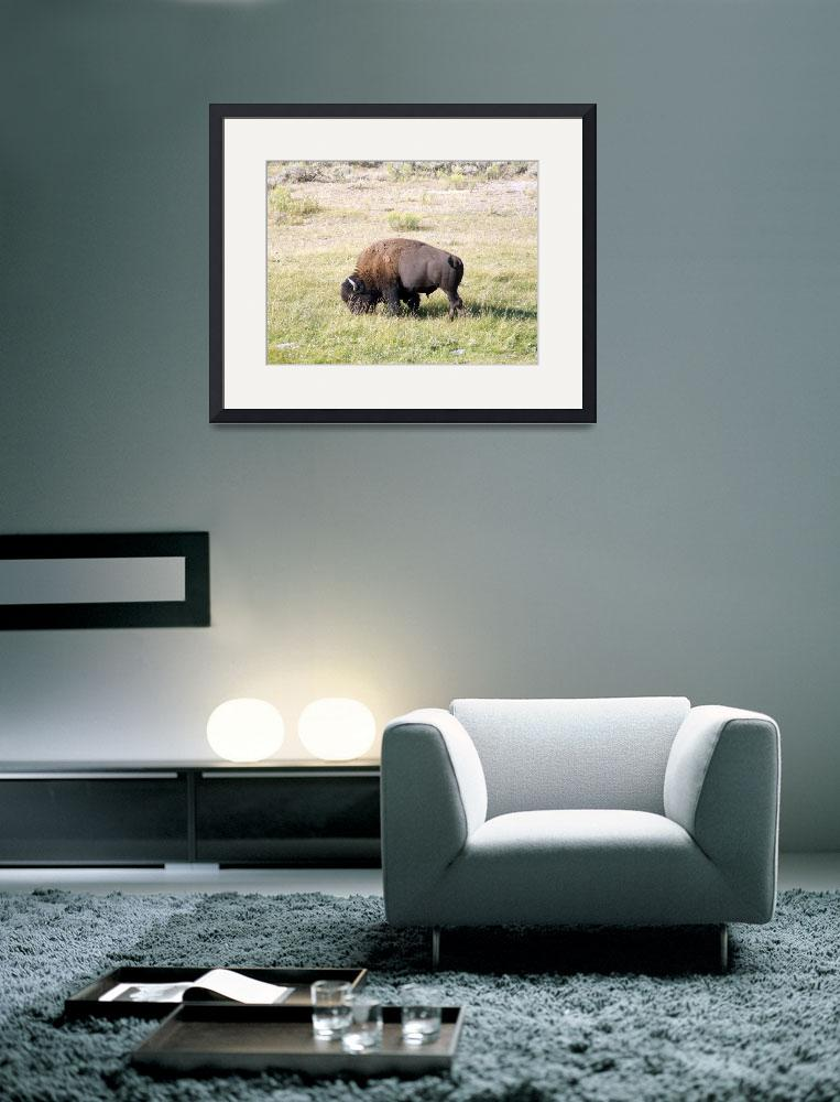 """Bison&quot  by Hartphotography"
