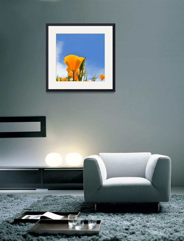 """Poppy and Sky&quot  (2011) by PatriciaSanders"