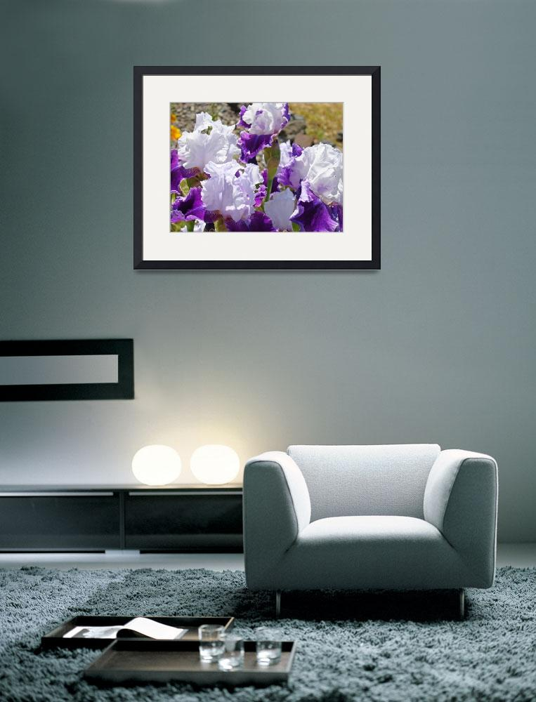 """Irises Flowers Purple Lavender Iris Flower Garden&quot  (2011) by BasleeTroutman"