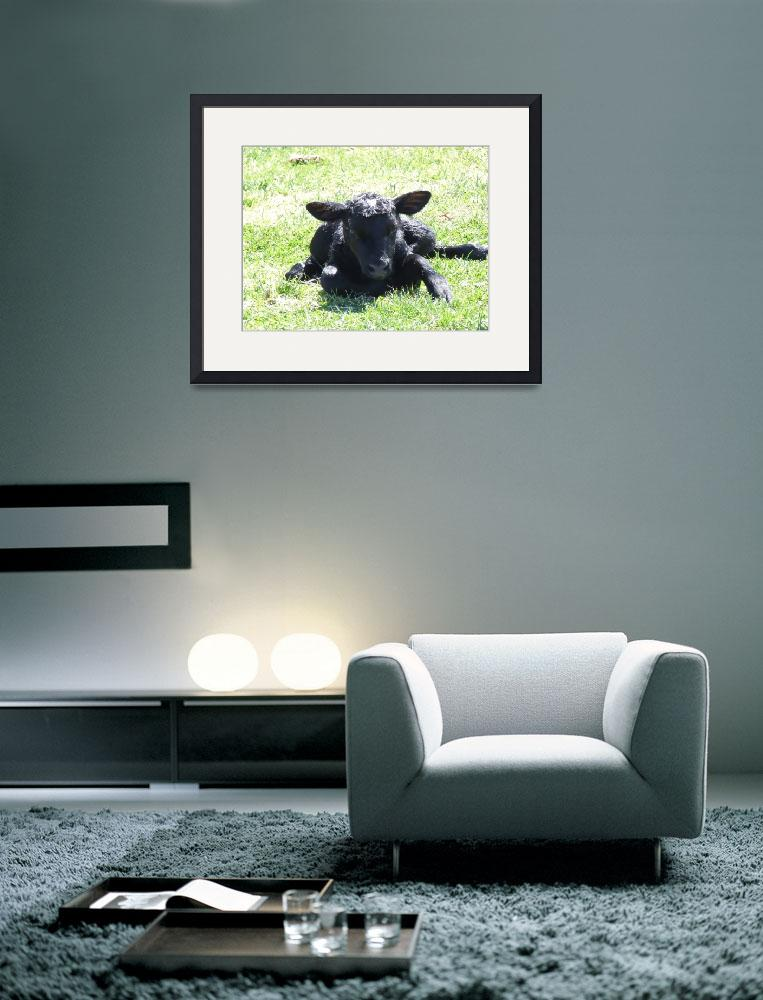 """New born calf&quot  (2009) by Hartphotography"