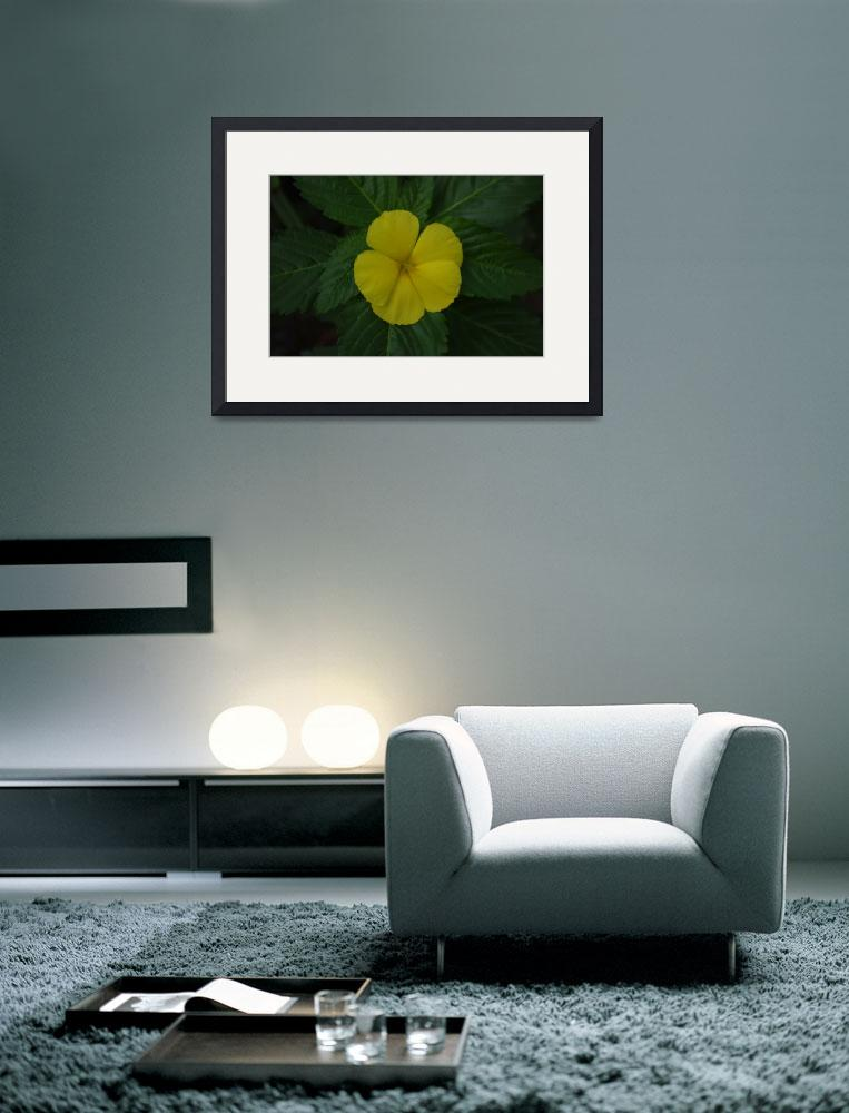 """yellow flower&quot  (2009) by kpijl"