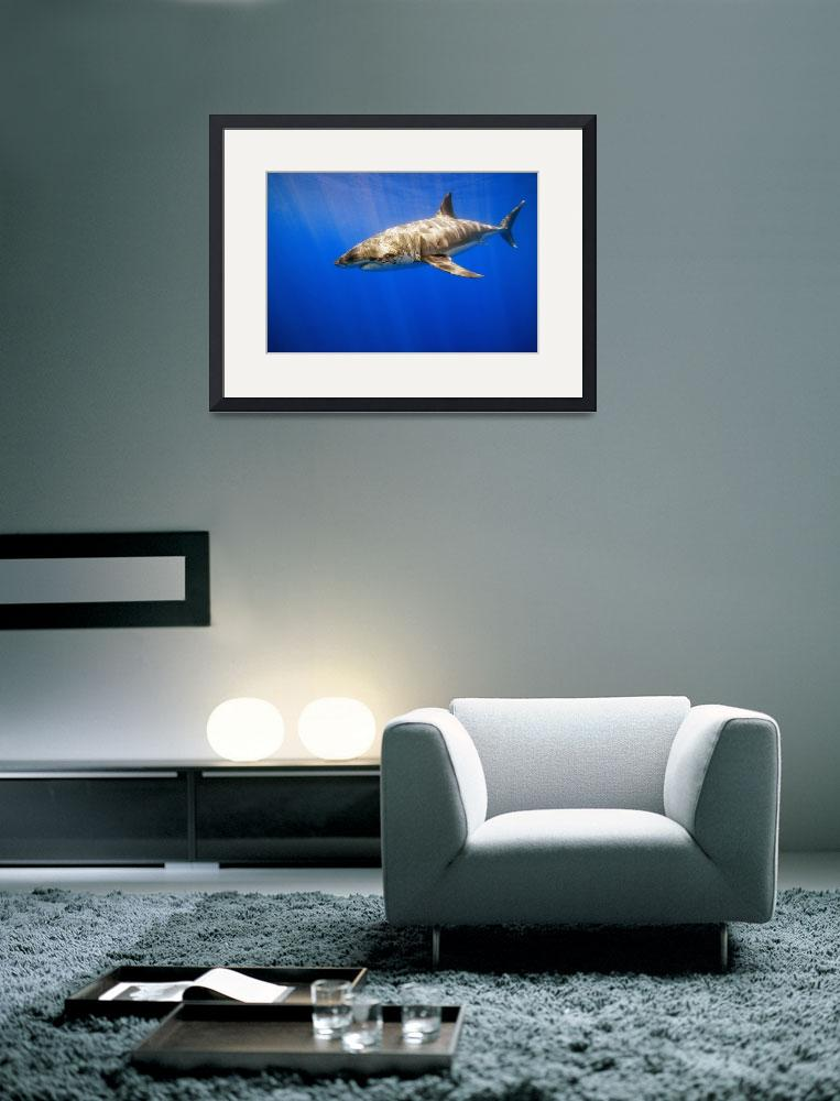 """Great White Shark&quot  by DesignPics"