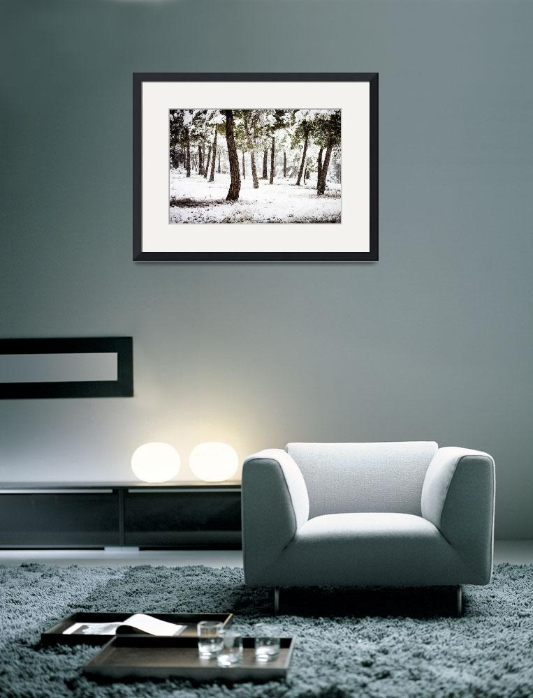 """White Forest&quot  (2012) by mgarrido"