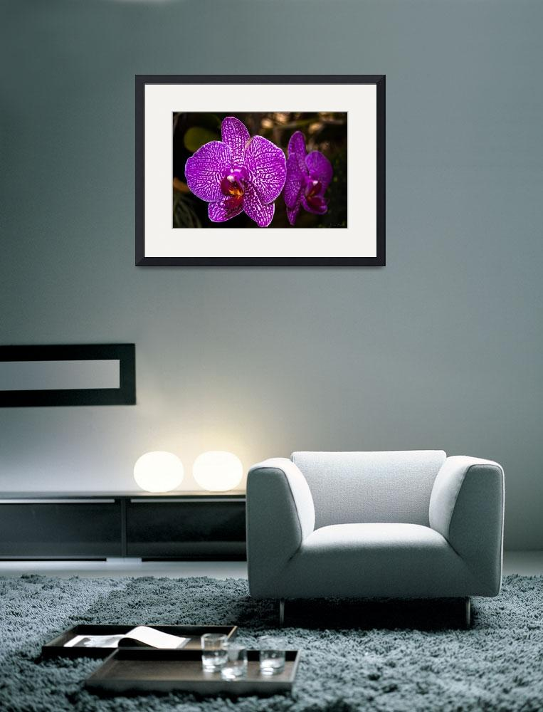 """Orchids_Madeira_3&quot  (2009) by JoaoFialho"