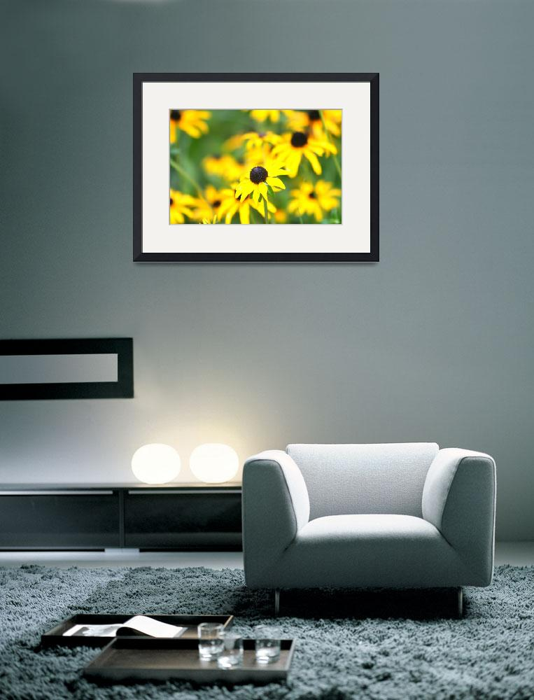 """Profusion of Black Eyed Susans&quot  (2008) by nadinerippelmeyer"